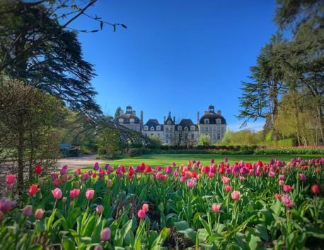 Tulipes a Cheverny