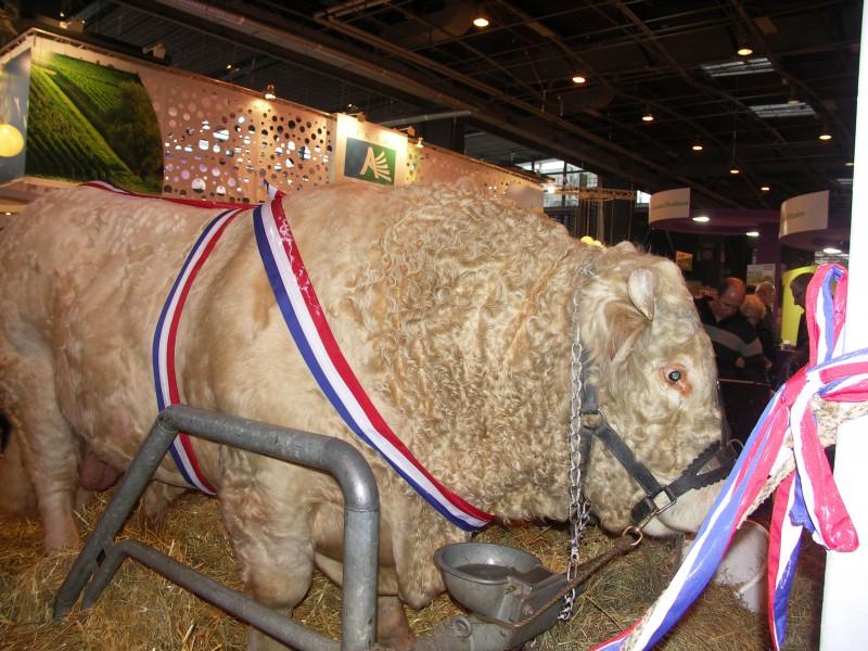 Salon international de l 39 agriculture paris combedouzou - Salon internationale de l agriculture ...
