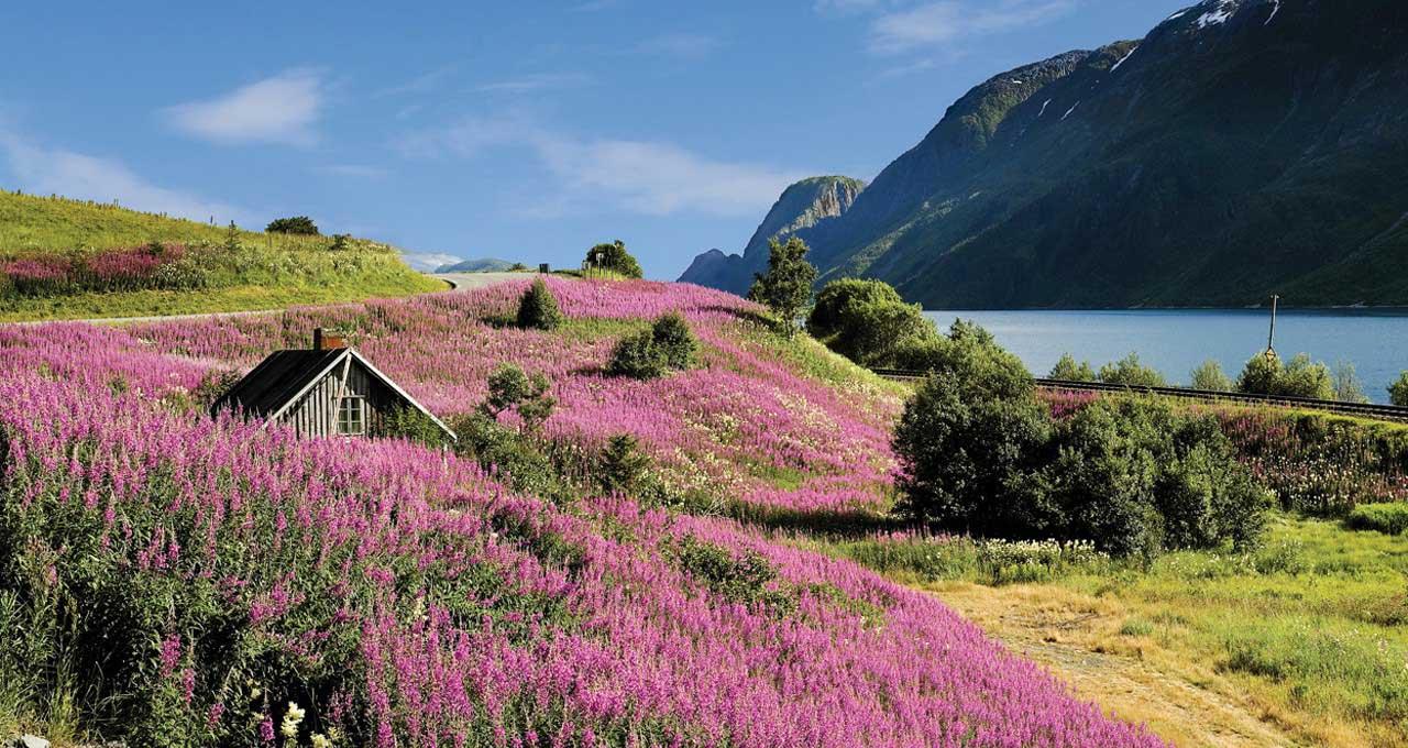 Vallons fleuris de Norvège