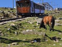 TRAIN DE LA RHUNE - COL D'IBARDIN