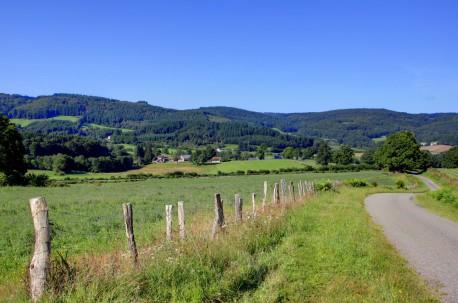 MYRTILLES DES MONEDIERES (Corrèze)