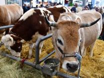 SALON INTERNATIONAL DE L'AGRICULTURE (PARIS)